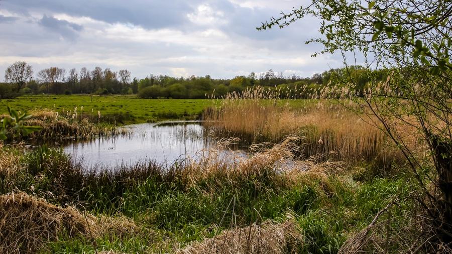 IMG 2023 Torfmoor-Luebbecke