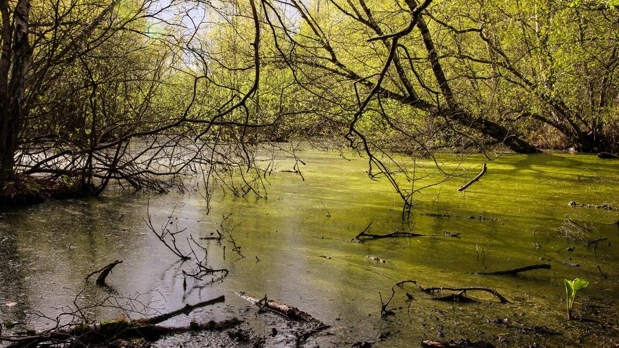 IMG 2068 Torfmoor-Luebbecke