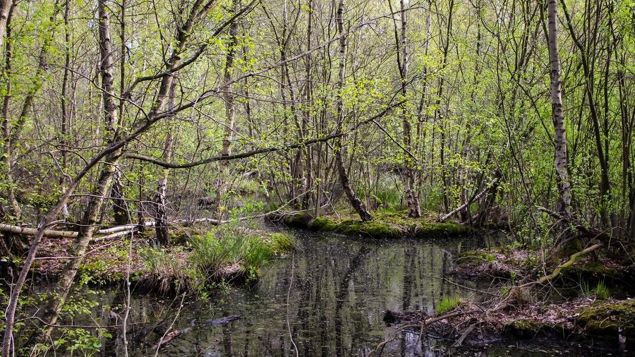 IMG 2069 Torfmoor-Luebbecke