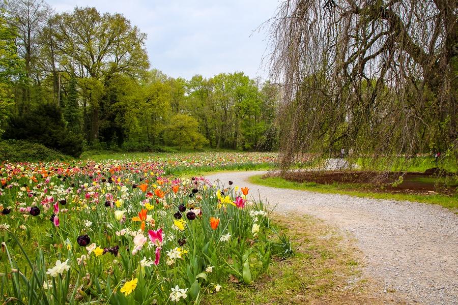 Weg entlang einer Blumenwiese