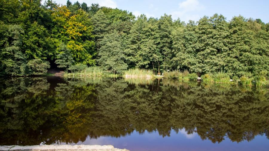 Waldblick mit Spiegelung