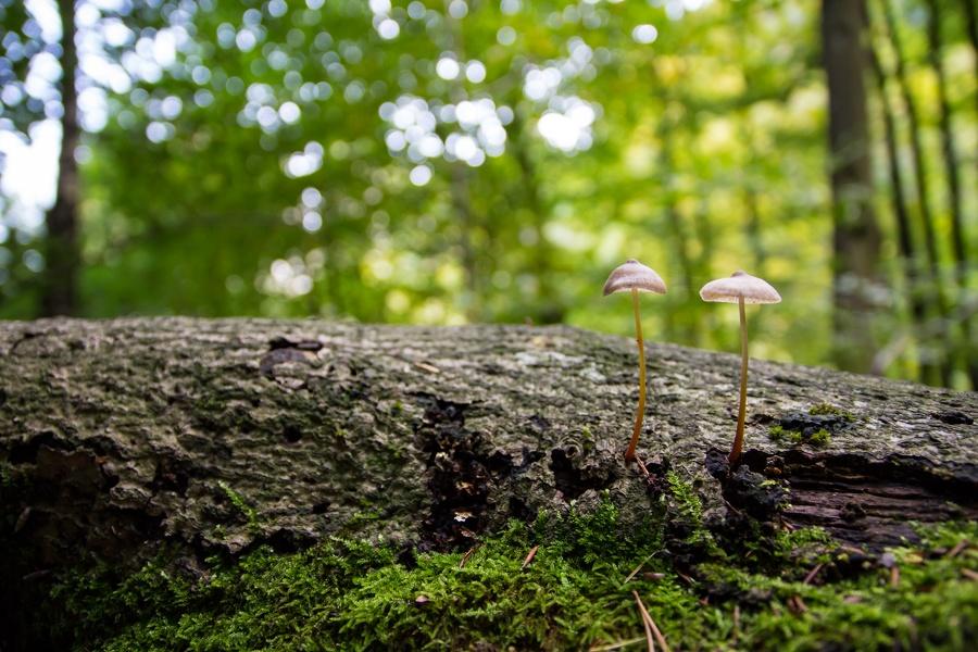 Zweisame Pilze