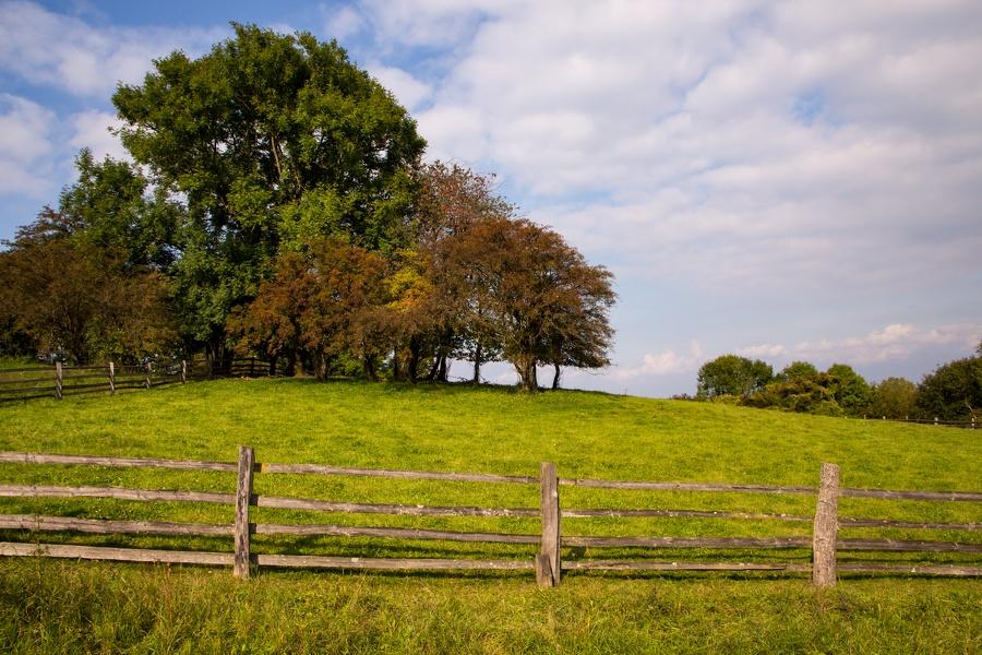 Bäume auf Hügel