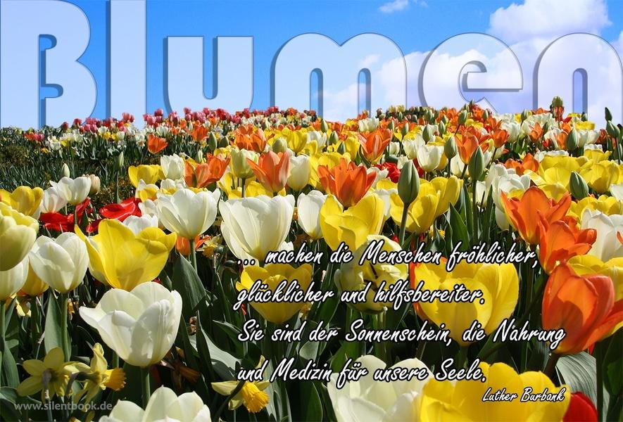 Spruch 0039-2