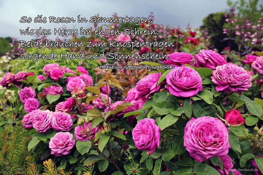Spruch 0084