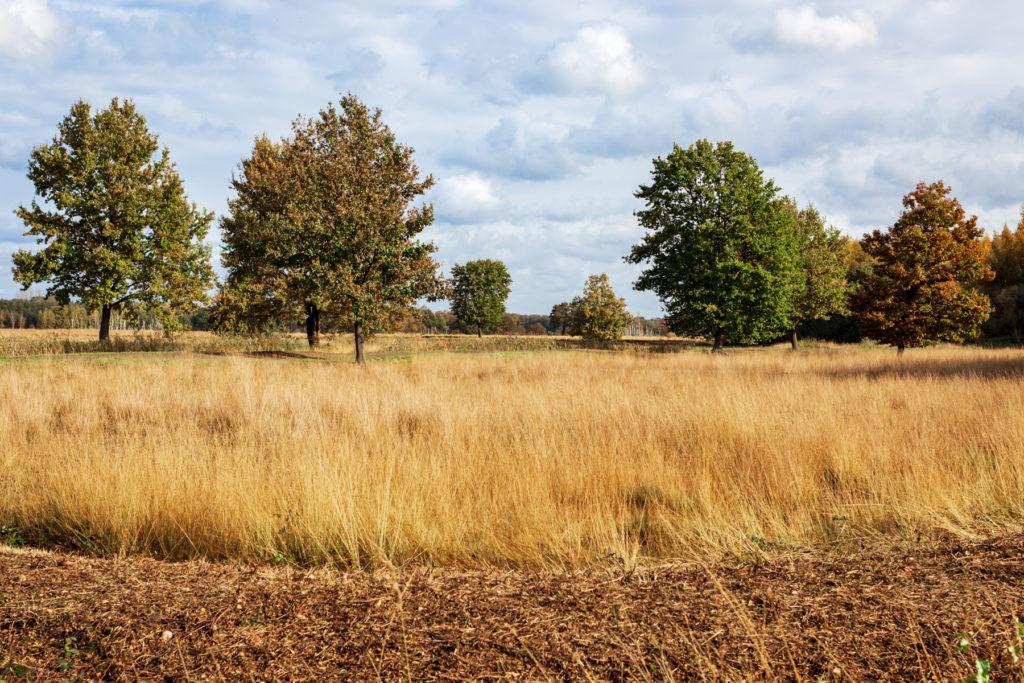 Torfmoor-Luebbecke-Herbst-2020-6094