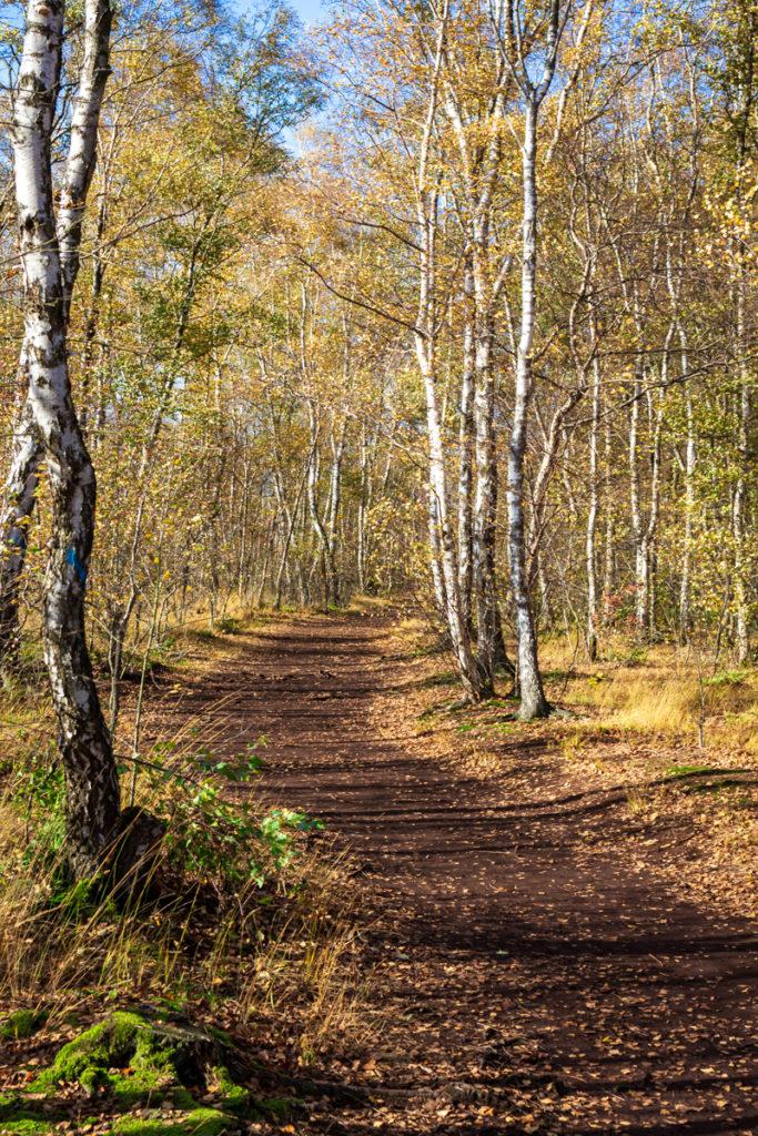 Torfmoor-Luebbecke-Herbst-2020-6127